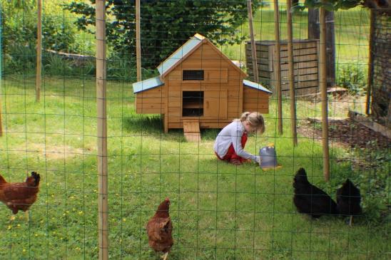mabel et poulets